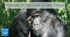 Episode 7: Gorillas in the Congo