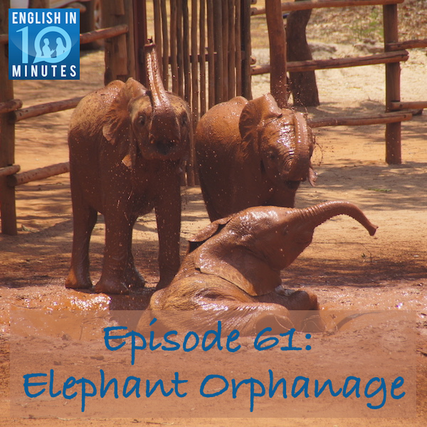 Episode 61: Elephant Orphanage