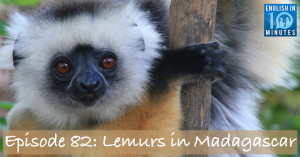 Episode 82: Lemurs in Madagascar