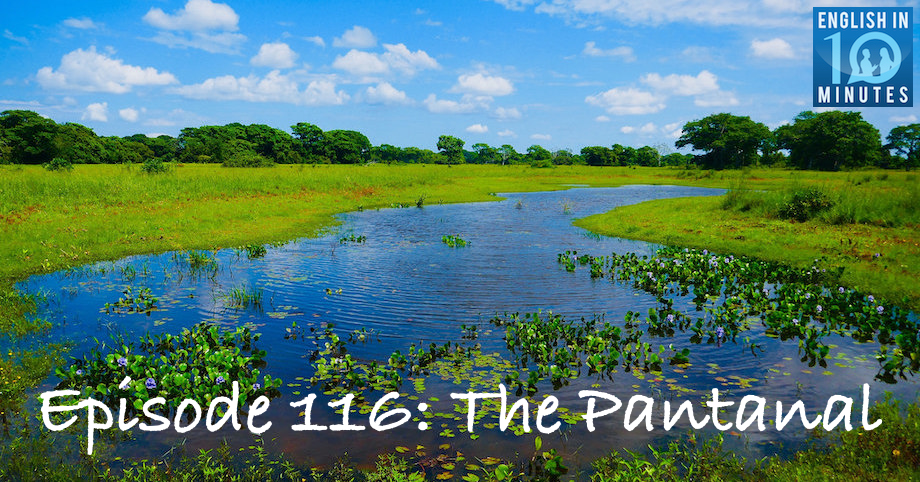 Episode 116: The Pantanal